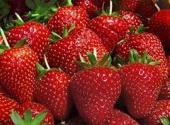 Najwyższej jakości truskawki deserowe z Polski