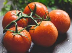 Pomidory na gałązkach i obrywane