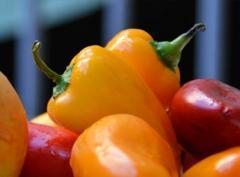 Papryka, różne odmiany