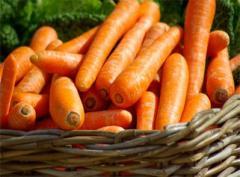 Świeże warzywa z polskich upraw