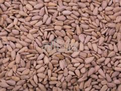 Siemię lniane, nasiona lnu na eksport