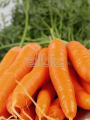Marchew świeża krajowa i importowana w dobrej