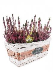 Koszyk do obsadzania kwiatów 39x20x16/21 cm