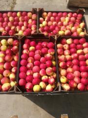 Jabłko Idared kaliber 6 do 8+ z wybarwionym rumieniem, sprzedaż cało samochodowa.