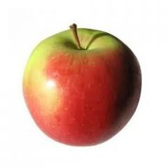 Jabłka lobo, kalibrowane, ilości cało samochodowe, producent.