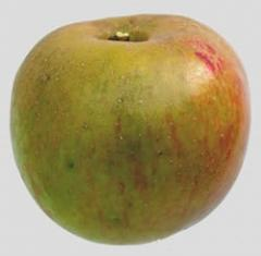 Jabłko w starej odmianie Boskoop, pakowanie w karton, skrzynkę lub worek, kalibrowane pod zamówienie klienta, sprzedaż cało samochodowa.