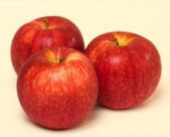 Zimowa odmiana, jabłka Elstar, ilości hurtowe, możliwość pakowania i kalibrowania.
