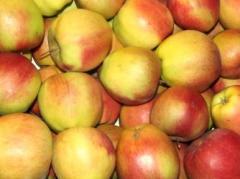 Jabłko Ligol, pełen zakres kalibracji, pakowanie na zamówienie, sprzedaż jabłka hurtowa, producent.