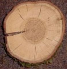 Drewno opałowe dąb