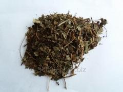 Truskawka liść,ziele truskawki ,poziomka truskawka ,fragaria ananassa duch,fragaria grandiflora