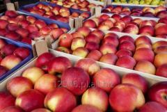 Jablko Idared, Gloster, Golden Delicious z Polski