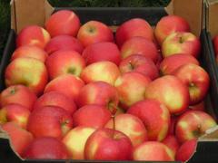 Яблоки Гала Муст из Польши доступен круглый год