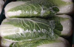 Chinese cabbage in bulk and foiled, Poland.