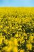 Nasiona poplonowe i rolnicze