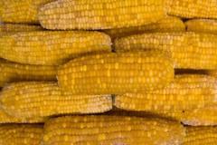 Kukurydza kolby