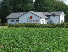Widok na plantację truskawek firmy Hortplant