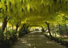 Sadzonki drzewa liściaste.