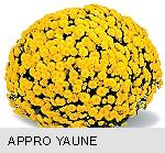 Chryzantema doniczkowe drobnokwiatowe jesienne