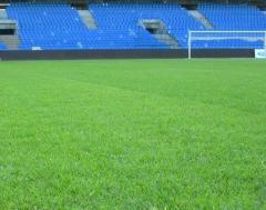 Trawnik sportowy