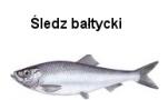 Салака