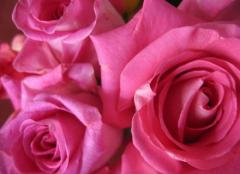 Konfitiura z płatków róży