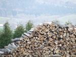 Drewno stosowe