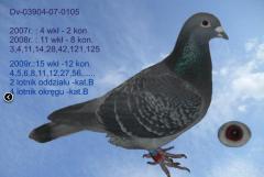 Gołębie z gołębnika lotowego