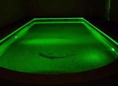 Podświetlany basen