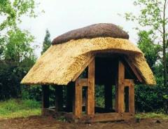Roofs made of reed