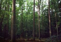 Sadzonki drzew i krzewów ogrodowych liściastych i