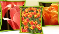 Róże cięte- bardzo szeroki asortyment i tulipany