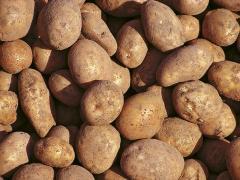 Ziemniak młody myty