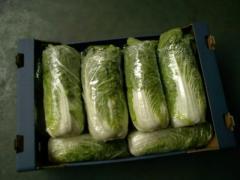 Warzywa sprzedaż hurtowa