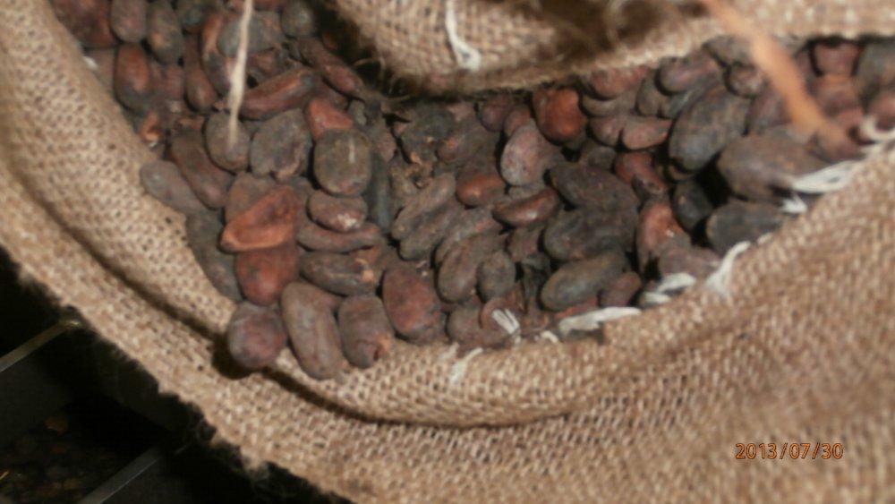 cocoa_beans_kakaobohnen_ziarno_kakaowca_surowe_juz