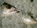 Ryby mrożone. Ryby mrożone w całości i filety rybne.