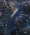 Pstrąg- jedna z najbardziej cenionych ryb.