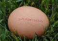 Kurze jaja wysokiej jakości. Jaja wolne od salmonelli!
