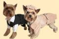 Komplety ubrań dla psich i kocich elegantów. Obszerna kolekcja.