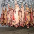 HALAL Sprzedam mięso wołowe schłodzone