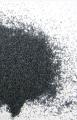Mak niebieski - Papaver somniferum