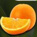 Pomarańcze o słodkich i soczystych owocach.