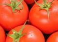 Pomidory świeże czerwone.