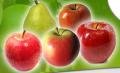 Jabłka różnych odmian.