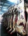 Półtusze wołowe