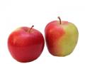Jabłka Delicates
