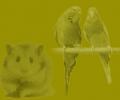 Karma dla ptaków i gryzoni