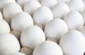 Jajka w proszku