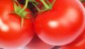 Pomidor w proszku