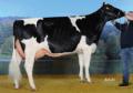Zwierzęta ras mlecznych i mięsnych