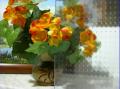 Szkło hartowane